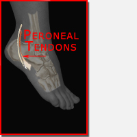 Peroneal Tendonitis Braces